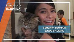Seru Main di Kafe Kucing Bandung
