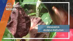 Indahnya Bunga Raflesia, Medan
