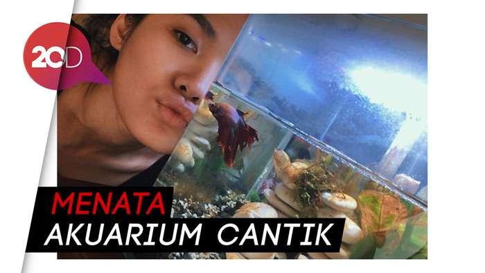Hikmah Pandemi, Sheryl Sheinafia Jadi Jago Bikin Aquascape