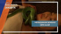Sensasi Unik Spa Ular Jakarta Selatan