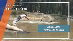 Berenang Bersama Tiga Ekor Buaya Sungai Labuhanbatu