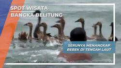 Lomba Menangkap Bebek, Bangka Belitung