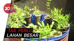 Yuk! Ternak Lele dan Sayuran dalam Sistem Mini Mina Ponik