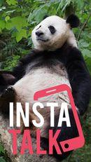 InstaTalk!: Mengenal Keunikan dari Giant Panda Taman Safari