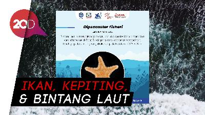 Ini Daftar 5 Spesies Hewan Laut Baru di Indonesia