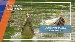 Memancing Buaya Kota Batu Malang