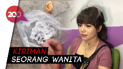 Ngeri! Video Dinar Candy Dikirim Santet Kayu Busuk