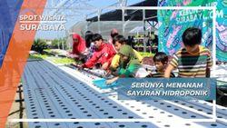 Bercocok Tanam Sayuran Hidroponik Surabaya