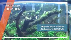 Aquascape, Seni Menata Taman Dalam Air Aquarium Jember