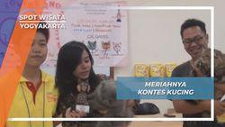 Kontes Aneka Kucing Yogyakarta, Ajang Silaturahmi Pecinta Binatang
