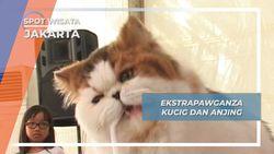 Extrapawganza, Ngopdarnya Kucing dan Anjing Lucu Jakarta
