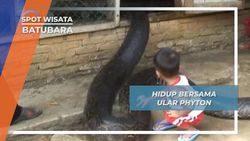 Hidup Bersama Ular Phyton, Batubara