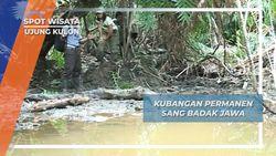 Kubangan Permanen Sang Badak Jawa, Ujung Kulon