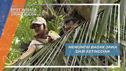 Mengintai Badak Jawa dari Ketinggian, Ujung Kulon