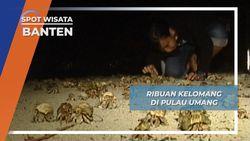 Ribuan Kelomang di Pulau Umang, Banten