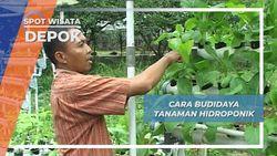 Budidaya Tanaman Hidroponik Depok
