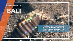 Bobbit, Monster Malam Bawah Laut Secret Bay Jembrana Bali