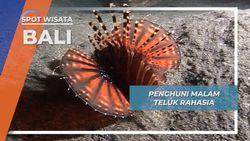 Penghuni Malam Nan Ramah Walau Berbisa di Secret Bay Jembrana Bali