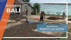 Rumput Laut Katoni, Budidaya Kemakmuran Nusa Lembongan Bali
