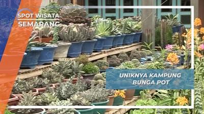 Kopeng, Kampung Bunga Pot Andalan nan Cantik di Semarang