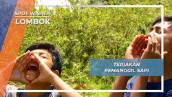 Teriakan Gembala Pemanggil Sapi Desa Sembalun Rinjani Lombok