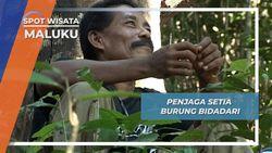 Penjaga Setia Burung Bidadari, Maluku