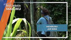 Memburu Air Nira, Maluku