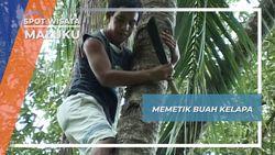 Memetik Buah Kelapa, Maluku