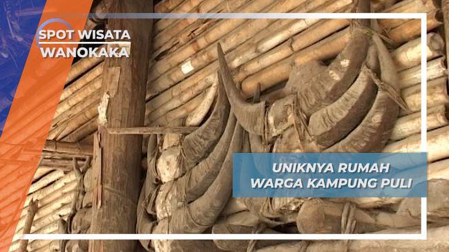 Dari Tanduk Kerbau Hingga Rahang Babi, Ornamen Unik Rumah Warga Kampung Puli, Wanokaka, Sumba