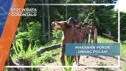 Sagu Sebagai Makanan Utama Suku Polahi, Gorontalo