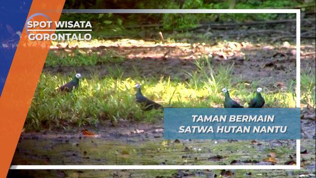 Taman Bermain Satwa Hutan Nantu, Gorontalo