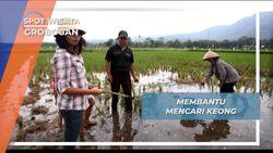 Nyimplung, Tongkat Mencari Keong Sawah Ambarawa