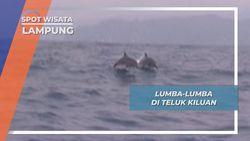 Pengalaman Luar Biasa, Bertemu Lumba-lumba di teluk Kiluan, Lampung