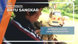 Manis dan Gurihnya Durian Asli Tanah Datar Batu Sangkar Sumatera Barat