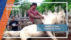 Menjinakkan Dengan Menungganginya, Sang Koboi Penakluk Kuda Liar Sumba