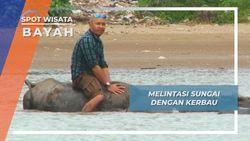Menyeberangi Sungai Bayah Bersama Sekawanan Kerbau di Lebak Banten