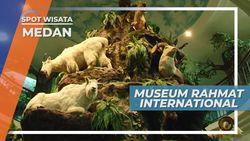 Museum Rahmat International, Nuansa Hewan Alam Liar Medan