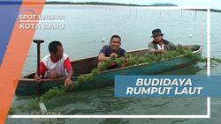 Budidaya Rumput Laut, Salah Satu Kegiatan Andalan Warga Pesisir Kotabaru Kalimantan Selatan