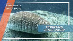 Teripang Pasir, Timun Laut yang Banyak Ditemukan di Perairan Kotabaru Kalimantan Selatan