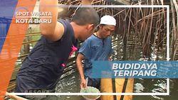 Budidaya Teripang, Salah Satu Mata Pencaharian Nelayan Kotabaru Kalimantan Selatan
