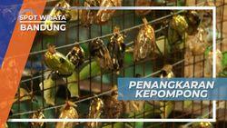 Mengunjungi Penangkaran Kepompong di Taman Kupu-kupu Bandung