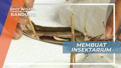 Belajar Membuat Insektarium, untuk Mengabadikan Keindahan Kupu-kupu, Bandung