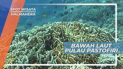 Indahnya Bawah Laut Pulau Pastofiri, Surga Tersembunyi di Halmahera
