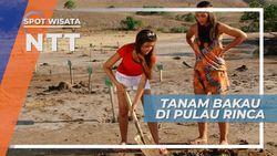 Melestarikan  Alam Pulau Rinca dengan Menanam Pohon Bakau, Nusa Tenggara Timur