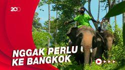 Celebrity on Vacation: Main Bareng Gajah di Lembah Hijau