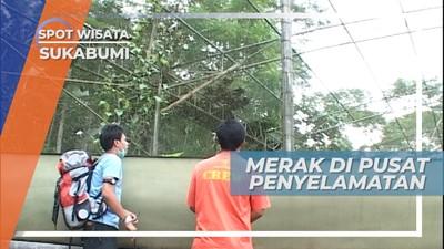 Mengunjungi Pusat Penyelamatan Satwa di Kampung Cikananga, Sukabumi