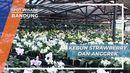 Mengunjungi Kebun Strawberry dan Anggrek di Bandung