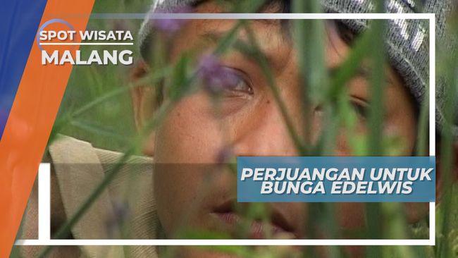 Pemburu Bunga Gunung, Pejuang Sejati Dalam Bingkai Indah Gunung Bromo