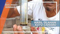 Ekstrak Minyak Wangi Yang Diperoleh Dari Hasil Sulingan Kayu Gaharu Sumbawa