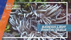 Bawah Laut Teluk Tomini, Mengagumi Keindahan Terumbu Karang Gorontalo Sulawesi